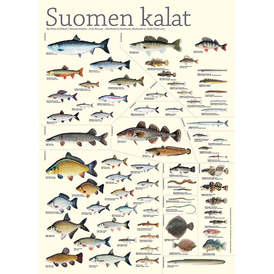Finlands fiskar -poster